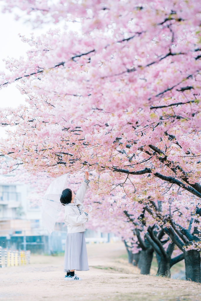 乙川の河津桜で撮影したロケーションフォト